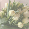 Rose_and_radish