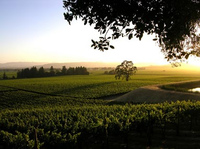 Wine_country_4